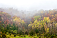 Foliage and Fog