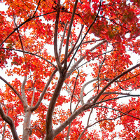 Tree With Fall Foliage