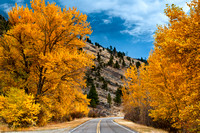 Foliage and Road, Wolf Creek, Montana