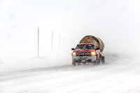 Pickup Truck Hauling Hay Bales in Blizzard
