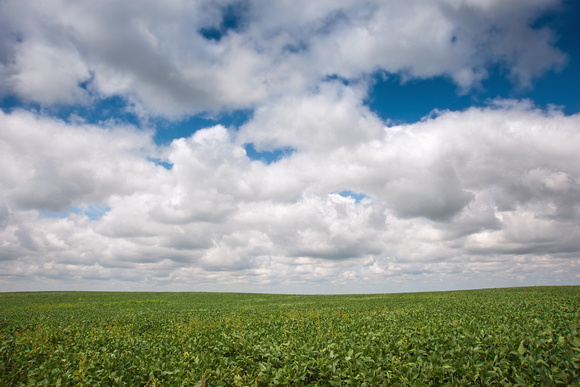Clouds Over Green Bean Field